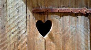 NEWS legno dono geniale della natura working process