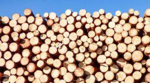 NEWS legno dal legno al infisso working process