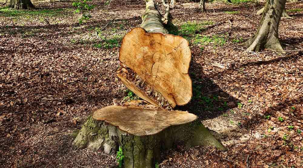 NEWS serramenti mito abbattimento foreste working process