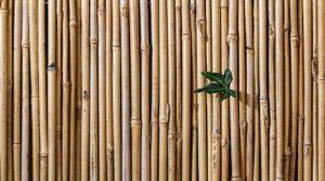 NEWS legno infissi in bambu working process