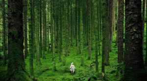 NEWS cultura forest bathing working process
